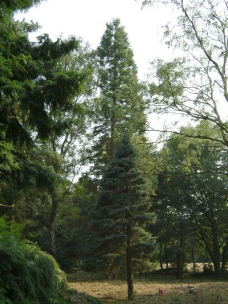 Pinetum De Dennenhorst, picture by Wilma Verburg, 2006-07-26