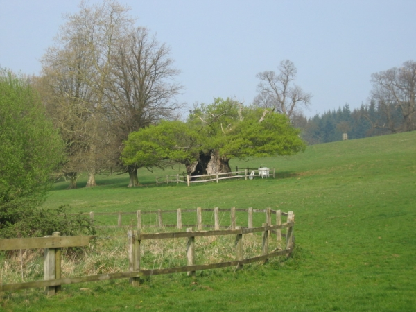 Cowdray Park, picture by Tim B, 2007-04-16