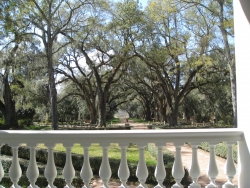 Southern live oak at Rosedown Plantation, St. Francisville, United States