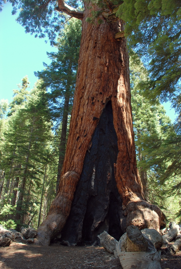 Mariposa Grove, photo par Nicola Corboy, 2008-09-03