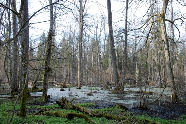 National Park of Białowieża, picture by Jeroen Philippona