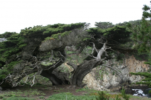 Point Lobos State Reserve, photo par Wim Brinkerink
