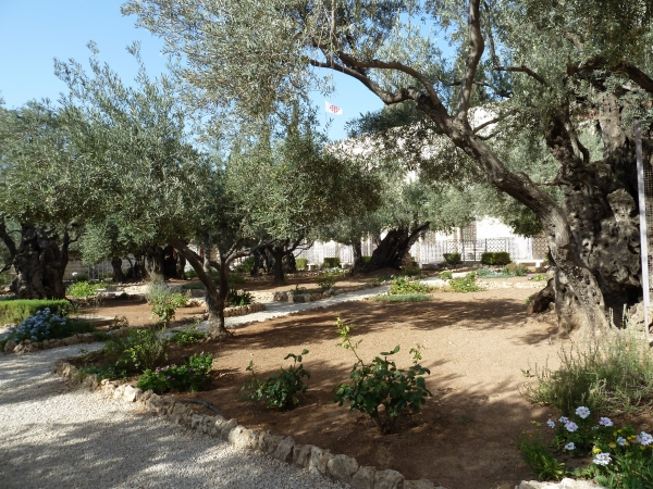 Gethsemane, picture by Tim B, 2011-07-27