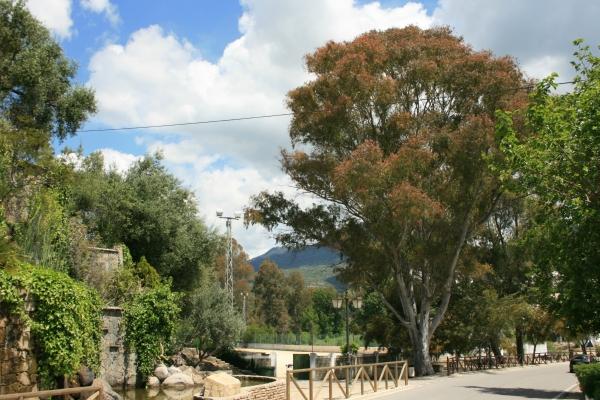 blaue eukalyptus am route 372 ctra de benamahoma a. Black Bedroom Furniture Sets. Home Design Ideas