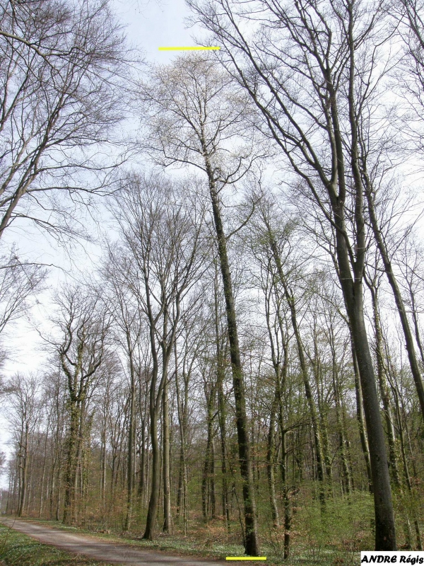 Forest of Grosbliederstroff, photo par Sisley, 2012-04-02