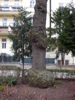 ahornbaum schneiden zeitpunkt