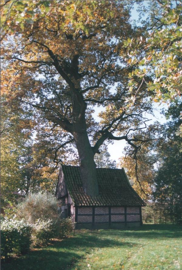 Erf van Jonkershoesweg 4, Breklenkamp, foto door Jeroen Philippona