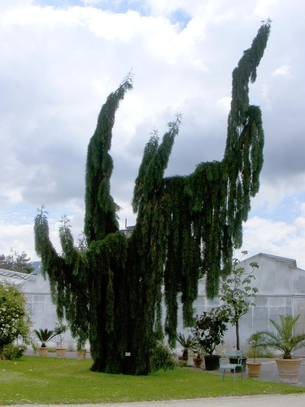arbres monumentaux dans le jardin des plantes d 39 orl ans orl ans loiret france. Black Bedroom Furniture Sets. Home Design Ideas