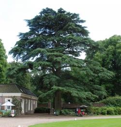 diskussion seite von jeroenzutphen14 · monumentale bäume, Hause ideen