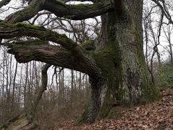 Nikon Entfernungsmesser Forestry Pro : Diskussion seite von rainer · monumentale bäume