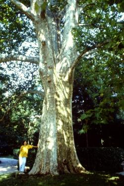 opname co2 door een boom