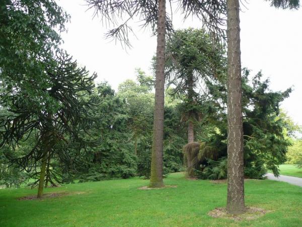 Rboles monumentales y singulares en el real jard n for Arboles jardin botanico