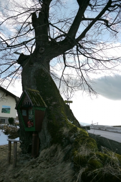 barbara zumbaum frankfurt