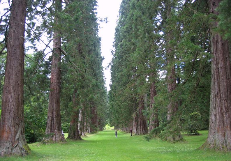 benmore botanic garden scotland