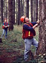 Hoe schat je het volume van een boom - Hoe een boom te verlichten ...