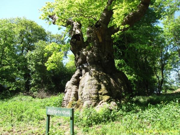 https://www.monumentaltrees.com/db/04/600/04115.jpg