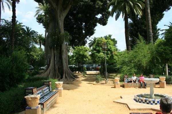 Monumentale bomen in jardin de murillo in sevilla andalusi spanje - Jardines de sevilla ...