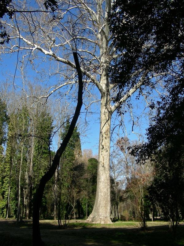 jardines del principe foto por jose angel manzanares elias