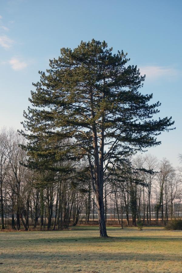 monumentale b ume im park des schloss wiesentheid in wiesentheid bayern deutschland. Black Bedroom Furniture Sets. Home Design Ideas