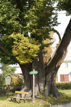Bilder von monumentale b ume in sachsen monumentale b ume for Steinigtwolmsdorf bad