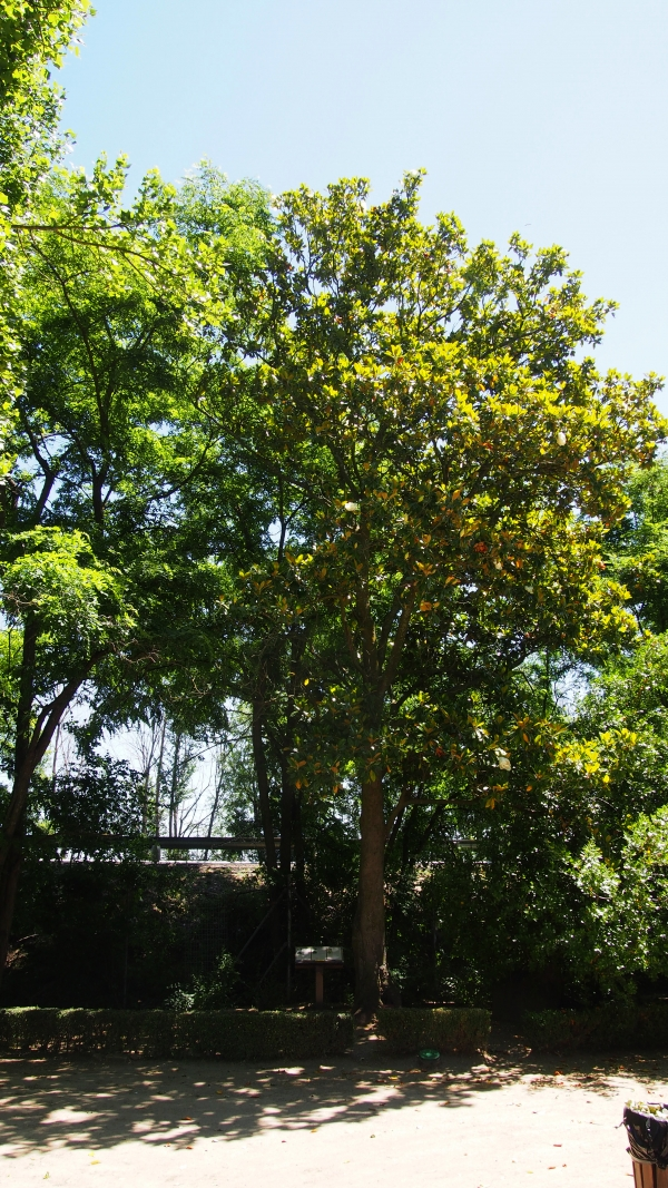 Rboles monumentales y singulares en jardin bot nico de for Arboles del jardin botanico
