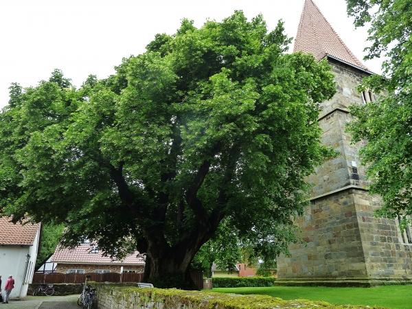 Großgoltern (Kirche), Bild von M Wittenberg, 2014-05-30