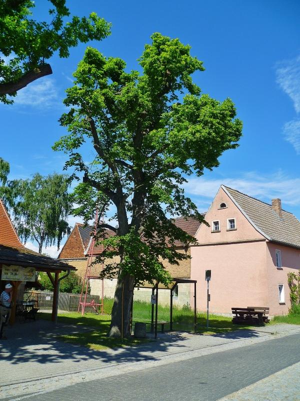 Backhaus in der Dorfmitte, Bild von M Wittenberg, 2014-05-20