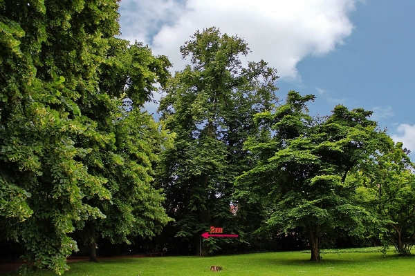Schloßgarten, Bild von M Wittenberg, 2014-06-25