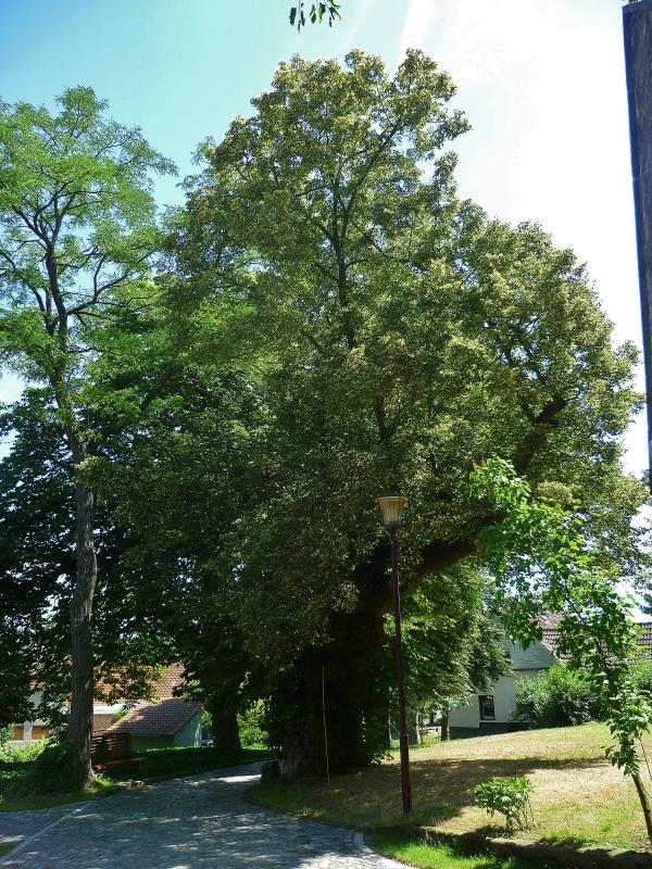 In Kirchscheidungen, Bild von M Wittenberg, 2014-07-03