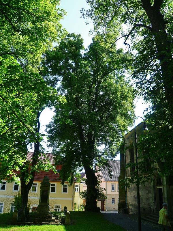 Der Maria-Magdalenen-Kirche, Bild von M Wittenberg, 2014-05-22