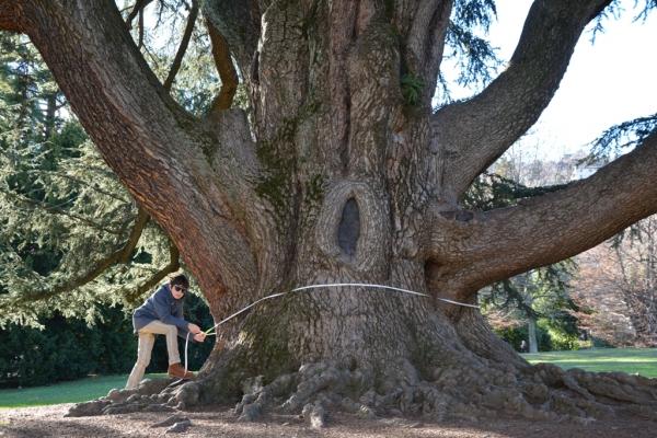 https://www.monumentaltrees.com/db/57/600/57598.jpg
