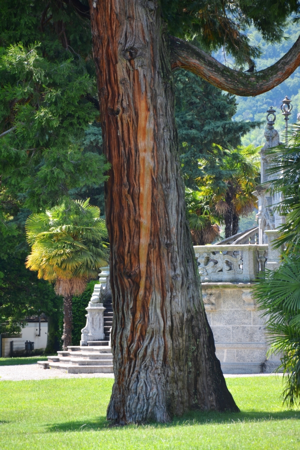 monumentale b ume im park des parco olivelli in mezzegra lombardei italien. Black Bedroom Furniture Sets. Home Design Ideas