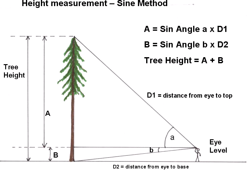 Height Tree A B