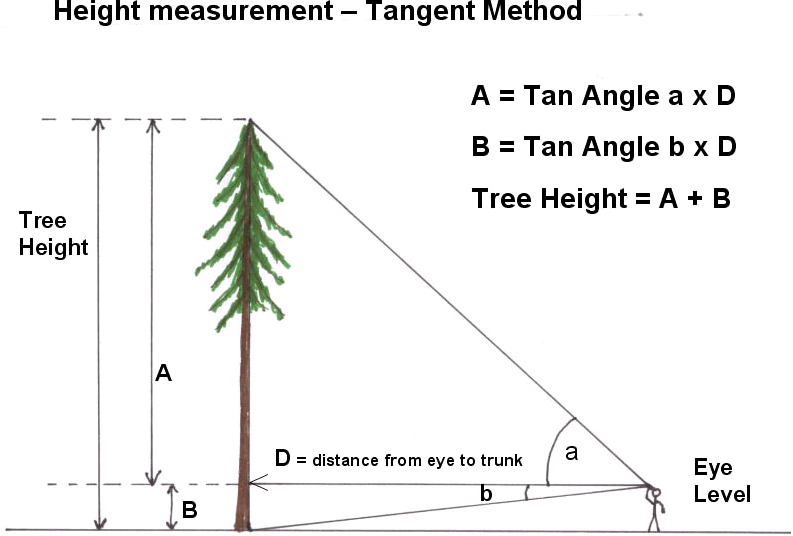 exactly measuring tree height