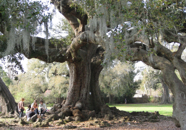 native trees of the southeast